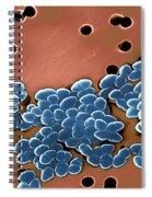 Vancomycin Resistant Enterococci Spiral Notebook