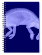 Veiled Chameleon X-ray Spiral Notebook