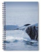 Whales Fluke Spiral Notebook