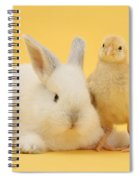 White Rabbit And Bantam Chick On Yellow Spiral Notebook