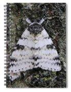 White Underwing Moth Spiral Notebook
