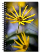 Wild Swamp Daisy Spiral Notebook