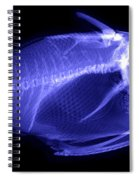 X-ray Of A Clown Triggerfish Spiral Notebook