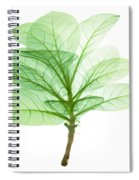X-ray Of Tobacco Spiral Notebook