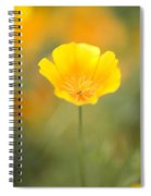 Yellow Poppy Flower, Mount Hood Spiral Notebook