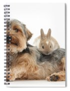 Yorkshire Terrier Dog And Baby Rabbit Spiral Notebook