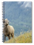 Young Bighorn Sheep, Windy Point Spiral Notebook