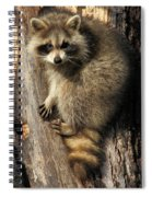 Young Raccoon Spiral Notebook