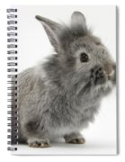 Young Silver Lionhead Rabbit Spiral Notebook