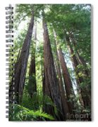Redwoods Sequoia Sempervirens Spiral Notebook