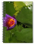 Waterlily Opening Part Of A Series Spiral Notebook