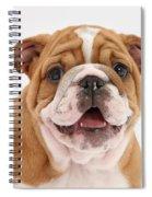 Bulldog Pup Spiral Notebook