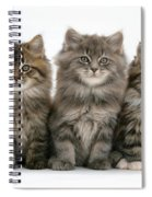 Maine Coon Kittens Spiral Notebook