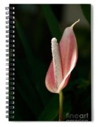 Balboa Park San Diego Spiral Notebook