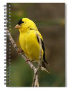 Finch Spiral Notebook