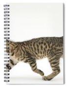 Tabby Kitten Spiral Notebook
