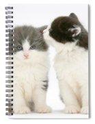 Kittens Spiral Notebook