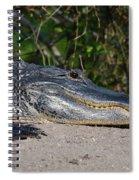19- Alligator Spiral Notebook