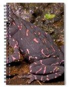 Harlequin Frog Spiral Notebook