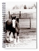 1900  Clydesdale Horse Spiral Notebook
