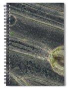 Amaryllis Leaf Epidermis Spiral Notebook
