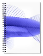 An X-ray Of Yellow Perch Spiral Notebook