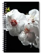 Apricot Flowers At Night Spiral Notebook