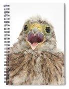 Baby Kestrel Spiral Notebook