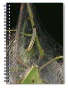 Bird-cherry Ermine Caterpillars Spiral Notebook