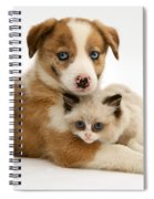 Border Collie And Birman-cross Kitten Spiral Notebook