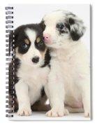 Boreder Collie Puppies Spiral Notebook