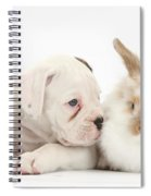 Boxer Puppy And Young Fluffy Rabbit Spiral Notebook