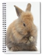 Bunny Grooming Spiral Notebook