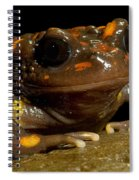 Chilean Mountains False Toad Spiral Notebook