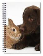 Chocolate Labrador Pup Spiral Notebook