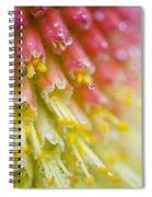 Close Up Of Flower Stamen Spiral Notebook