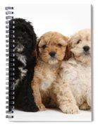 Cockerpoo Puppies Spiral Notebook