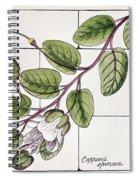 Colosseum: Flower Spiral Notebook