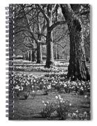 Daffodils In St. James's Park Spiral Notebook