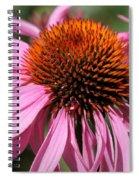 Echinacea Purpurea Or Purple Coneflower Spiral Notebook