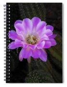 Echinopsis Aurea  Spiral Notebook