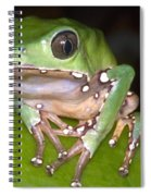 Giant Monkey Frog Spiral Notebook