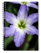 Glory Of The Sun Spiral Notebook