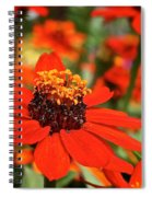 Gold Crown Spiral Notebook