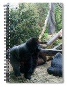 Gorillas Spiral Notebook
