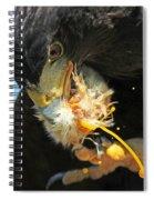 Harris Hawk Feeding Spiral Notebook