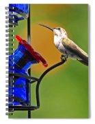 Hummer At The Feeder Spiral Notebook