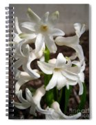 Hyacinth Named Aiolos Spiral Notebook