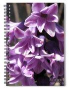 Hyacinth Named Splendid Cornelia Spiral Notebook