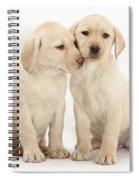 Labrador Retriever Puppies Spiral Notebook